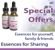 Essences for Sharing - Special Offers